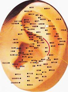 耳つぼのツボの位置の図