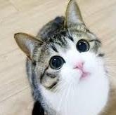 猫背のモデル猫